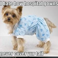DoggyGown